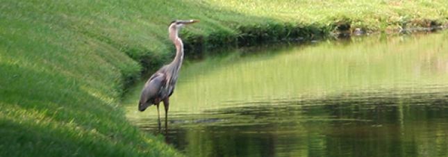 Heron on Shore